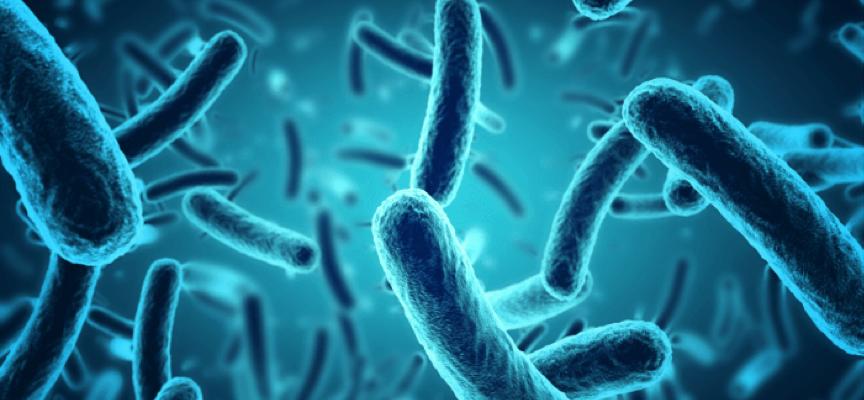 Tu stii unde se ascund microbii din casa ta?